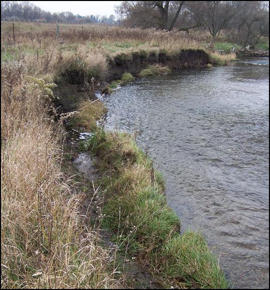 Figure 1.  Severely eroded stream bank prior to restoration efforts.