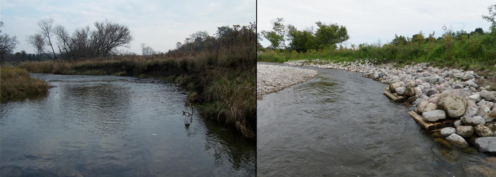 Figure 4. Bank stabilization project before (left) and after 1 year (right). Note the stream channel has narrowed and the water is much deeper than before the project was undertaken. The point bar (gravel) on the left of the after photo was deposited naturally after the first big rainfall in the spring.
