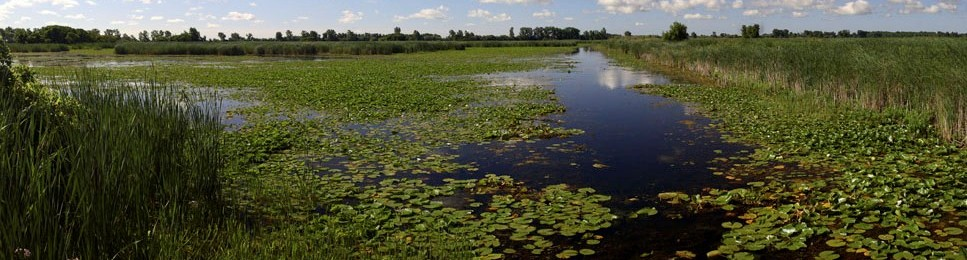 Lake St. Clair marsh: photo credit Al Woodliffe - redtired OMNR